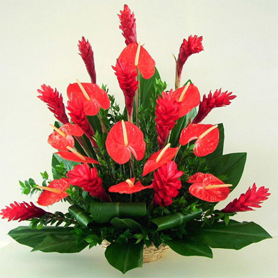 Комнатные цветы антуриум правила